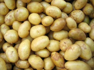 Single UK Seed Potato Variety Open Days @ Various